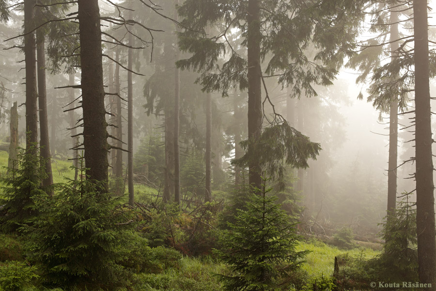 Random Image of Primeval Forest with Beautiful Trees.